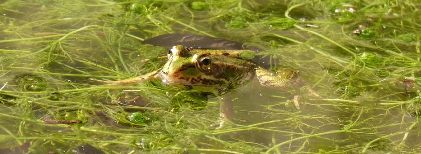 藻が繁殖した池の写真