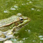 水槽内の茶苔・黒髭苔・糸状藻の原因と対策