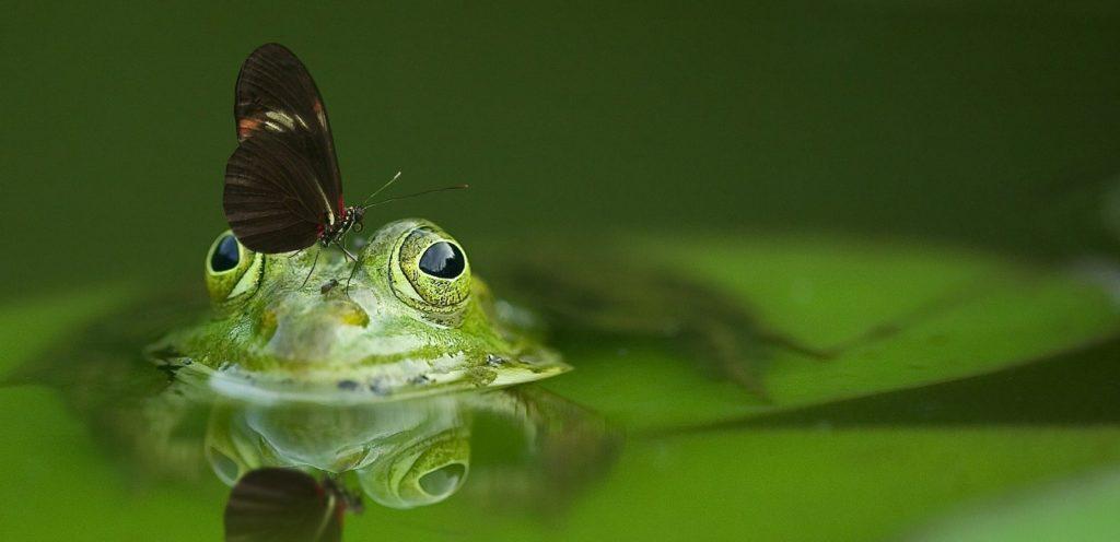カエルと虫の写真