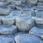 【アクアリウム】龍王石による水槽内の水質変化を実験調査