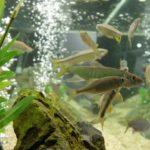 水替え頻度で変わる60cm水槽で飼える魚の数
