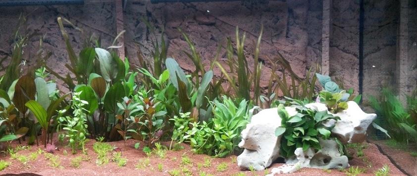 水槽内の水草の写真