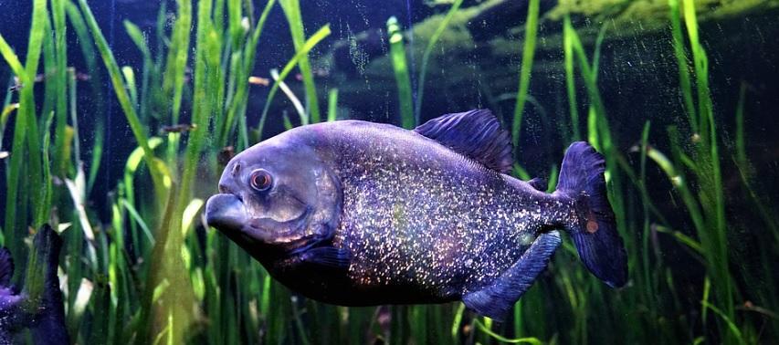 ごつい魚の写真