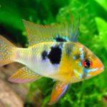 熱帯魚の色は何で決まるの?失敗しない魚選びのポイント