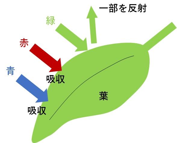 光を反射する葉が緑色に見える図