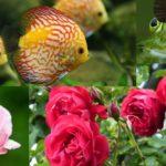 アクアリウム用ソイルを園芸に再利用する最適な方法
