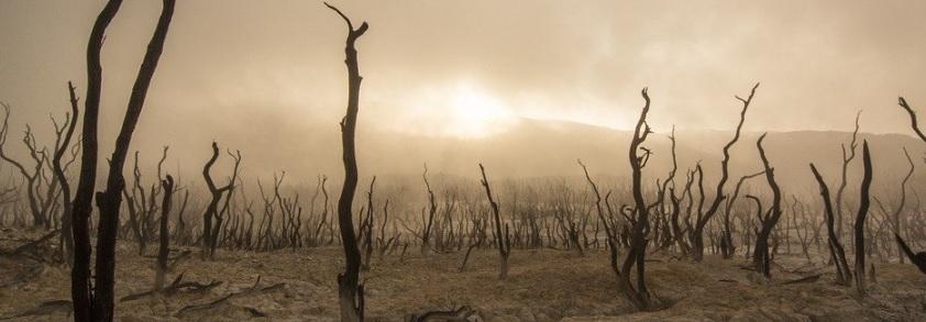 枯れた木々の写真