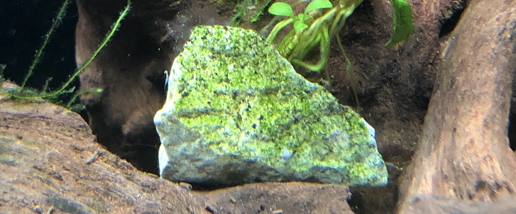 オトシンくするの好きな糸状藻