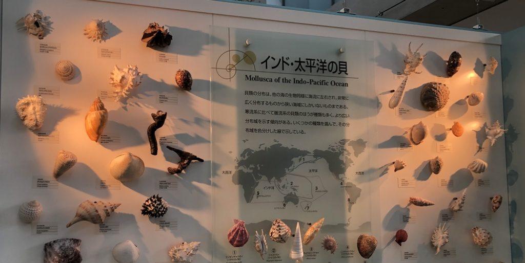 貝類館の内部写真