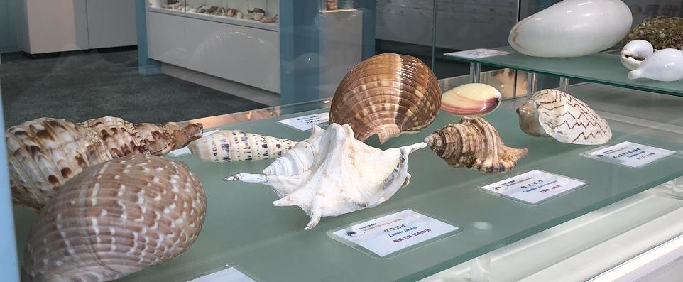 世界中の貝の展示