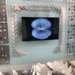 西宮市貝類館へ世界中の珍しい貝を見に行こう