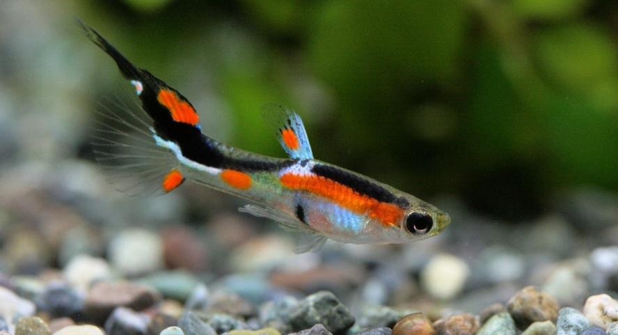 熱帯魚のpHショックを防ぐための安全な水替え方法とは?
