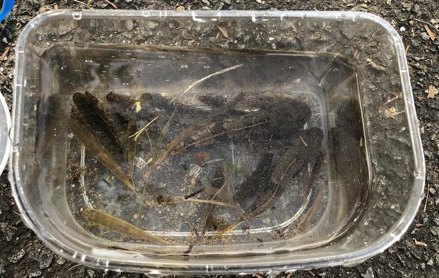 ヨーデルの森で捕まえた魚の写真2