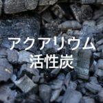 アクアリウムにおける活性炭の役割と汚れや臭いを吸着する原理