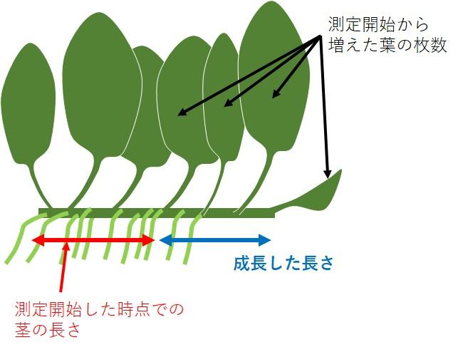 アヌビアスナナの成長速度の測定方法